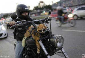 biker-cat-links-624x425